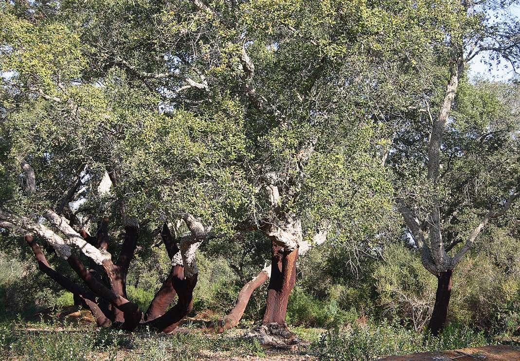 Il bosco di Santo Pietro